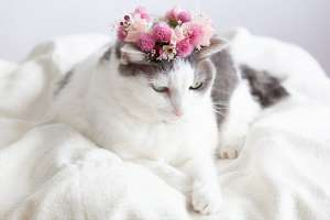 花冠をつけた猫
