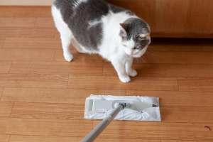 掃除を見守る猫