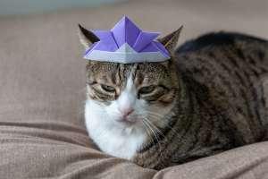 猫の変顔(こどもの日)