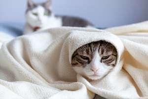 猫の変顔(てるてる坊主)