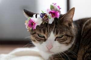 猫の変顔(花冠)