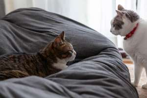 最後まで猫を愛する
