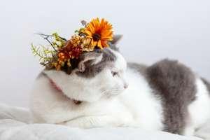 花冠をつけている猫