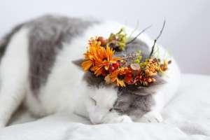 猫用の花冠