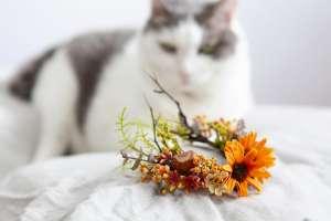 森ガール風の花冠(猫専用)