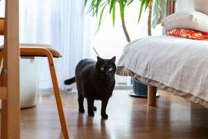 穏やかな性格をした黒猫