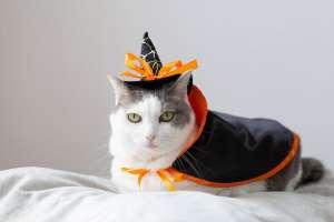 ハロウィンの仮装(猫)