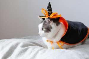 魔女の仮装する猫