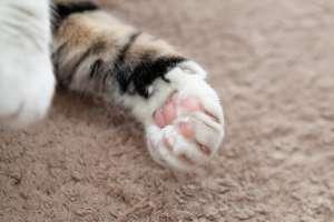 猫の肉球は可愛い
