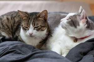 仲良く一緒に眠る猫たち