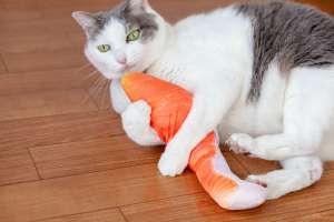 鮭の蹴りぐるみに抱きつく猫