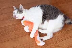 遊んでる猫の姿が可愛い(鮭の蹴りぐるみ)