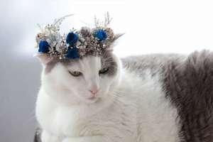 冬の雪をイメージした花冠と猫