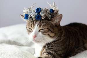 花冠(猫専用)