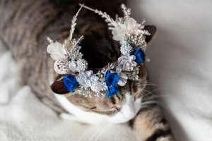 雪をイメージした花冠(猫専用)