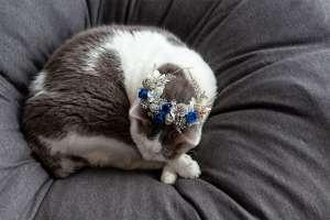 花冠をつける猫