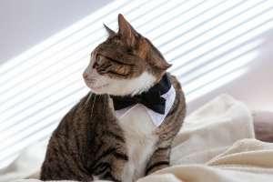 紳士的な猫