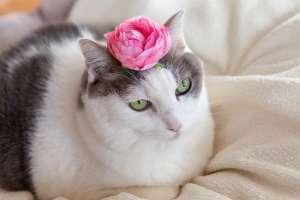 ピンクの花を頭にのせた猫