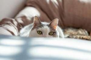 人見知りの猫