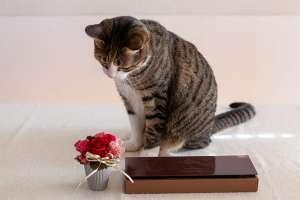 日比谷花壇の花を見つめる猫