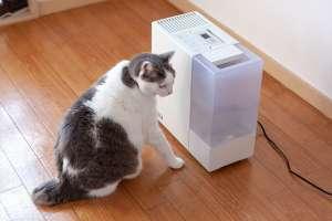 ストーブと間違えて加湿器の前で座る猫