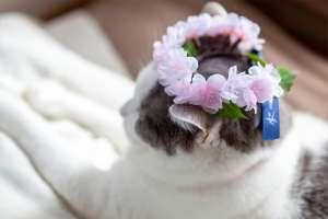 お花見気分(猫)