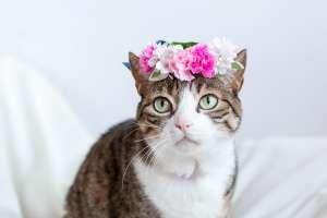 母の日の花冠(猫用)