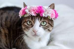 かわいい花冠(猫)