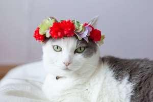 カーネーションの花冠(猫)