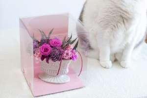 プリザーブドフラワーアレンジメントと猫(日比谷花壇)