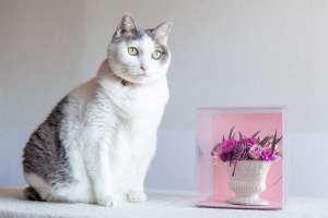日比谷花壇 ピンクのフラワーアレンジメントと猫