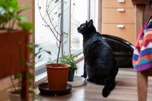 穏やかに暮らす元保護猫