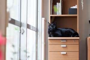 黒猫のナイルくん