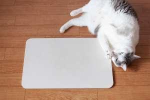 猫は珪藻土のマットが好き