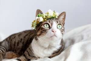 Flower Crown for Cat