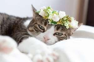 薔薇の花冠をかぶった猫