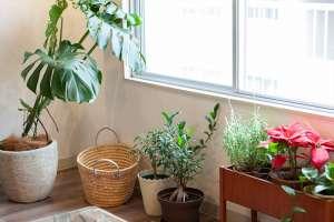 観葉植物が素敵なお部屋