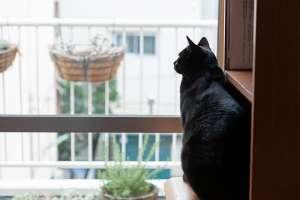 猫は窓の外を眺めるのが好き