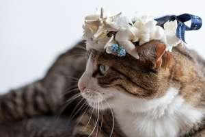 夏っぽい花冠(猫用)