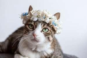 猫の花冠(夏用)