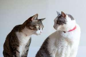 可愛い二匹の老猫